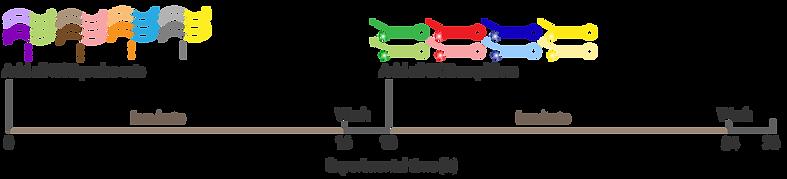 protocol-timeline_RNA-Flow.png
