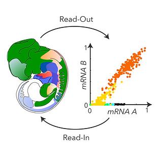 HCR-readout-readin-thumbnail-01.png
