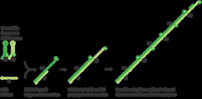 HCR-mechanism_desktop.png