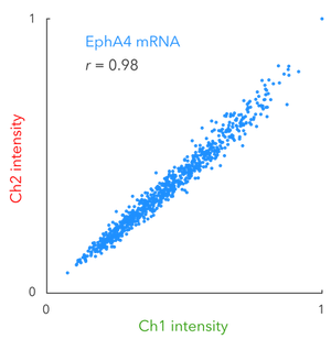 qHCR-imaging_qHCR-RNAscatterplot.png