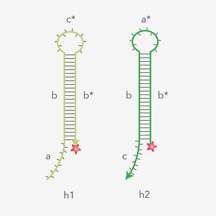 HCR-hairpins-thumbnail-01.png