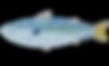 fish_saba2.png