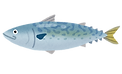 fish_saba2.png