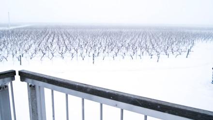 vineyardshot.JPG