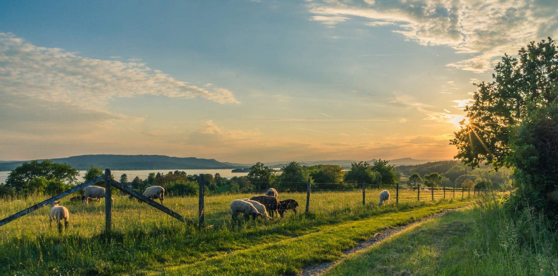 lake-constance-sheep-pasture-sheep-blue-