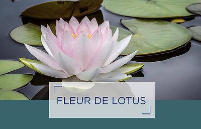 lotus fb.jpg