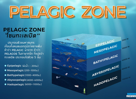 Pelagic Zone - Zones of the ocean