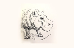 Hippo long