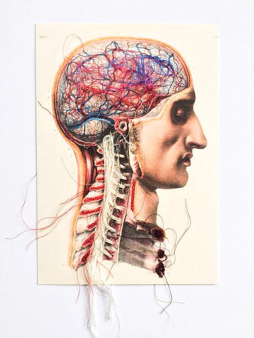 Brain Nervous II