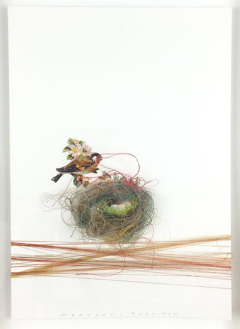 Bird Nest IV
