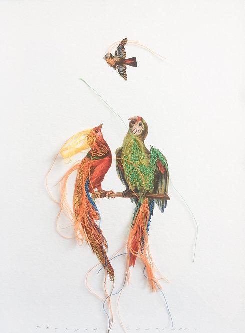 Two parrots & bird