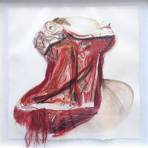 Arteriae Coli