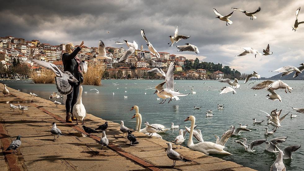 animals-avian-beach-760984.jpg