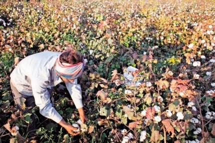 다니엘 케리미의 버크만 클라인센터, 극한 가뭄에 농부들 자살 줄잇는 인도에 '착한 인공지능' 해결사로 나섰다