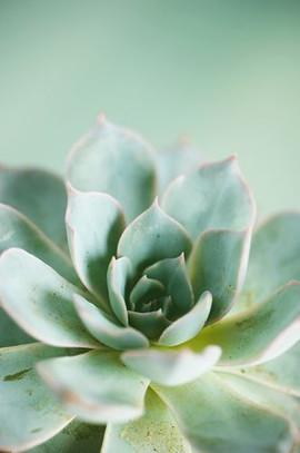 succulent_preview.jpeg.jpg