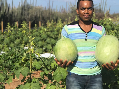 Agriculture in Aruba: A sector ripe for the picking