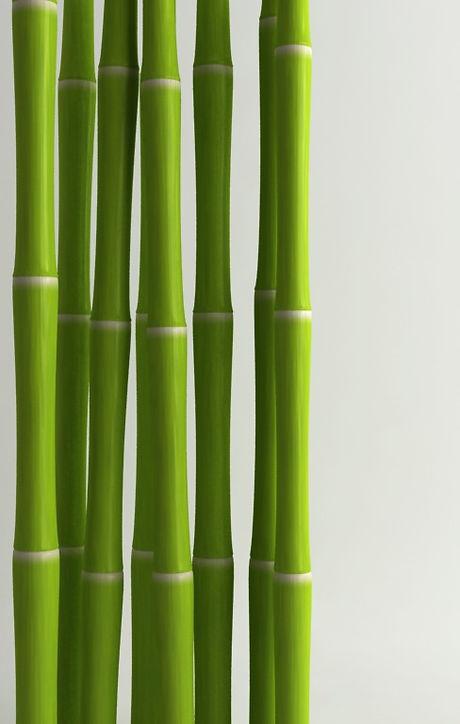 Bamboo%20_edited.jpg