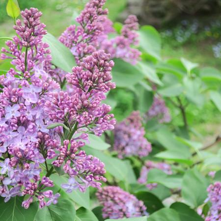 ・hana・花の香り