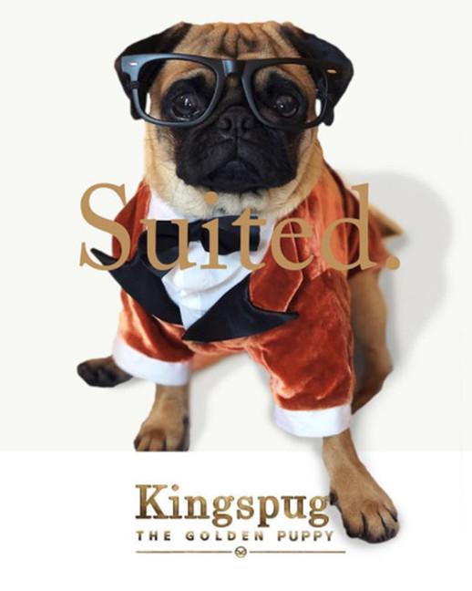 Kingsman 2017 premiere: @butchcassidythepug silk velvet tuxedo