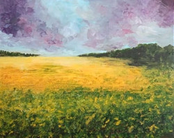 Canola fields of Durbanville