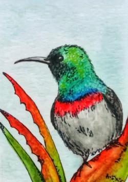 Sunbird (SOLD)