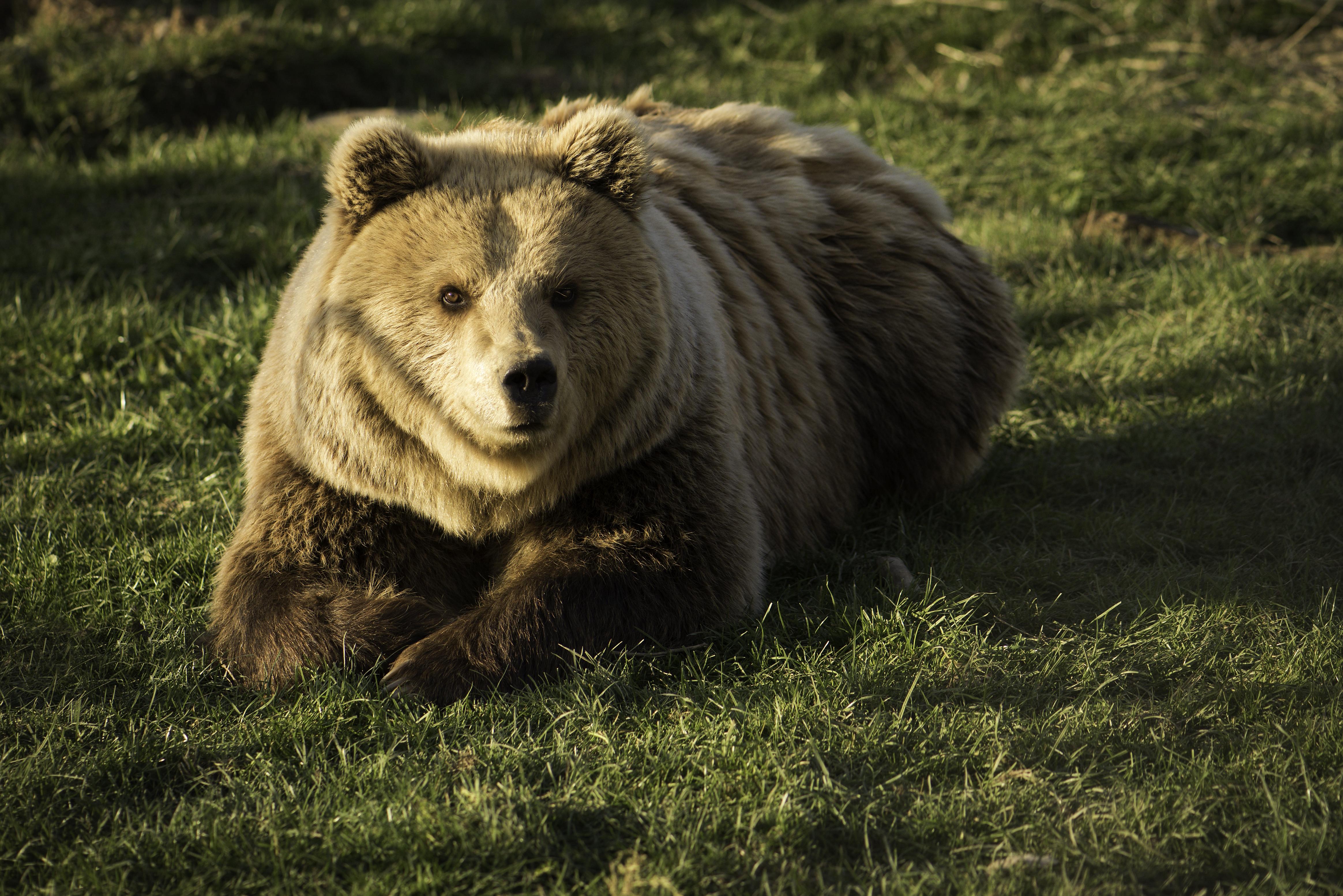 3. Bear Rina _