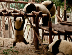 Wolong National Nature Reserve 4