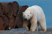 World Bear Day