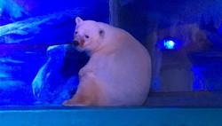Polar Bear in china mall