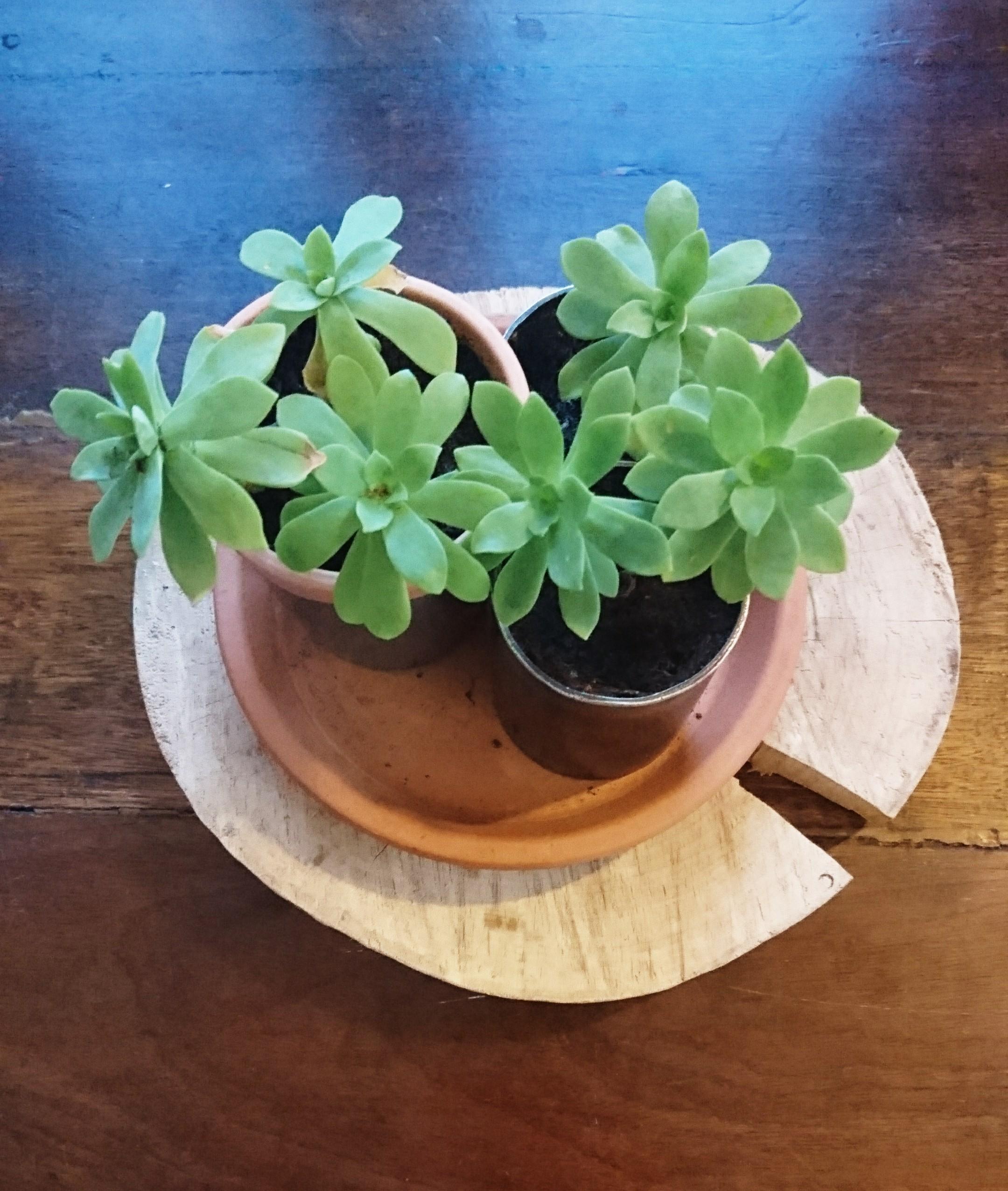 Jolies plantes pour jolie détente !