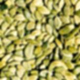 shelled pumpkin seeds
