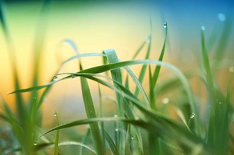 grass-3274686_1280.jpg