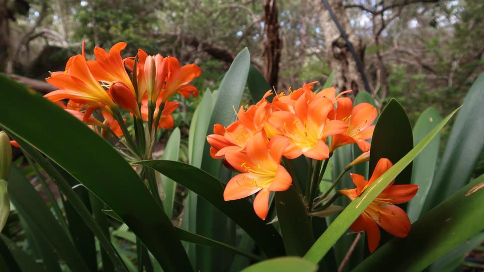Flower Plant022.JPG