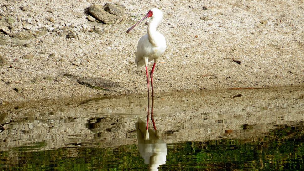 Bird Animal Dam 001.jpg