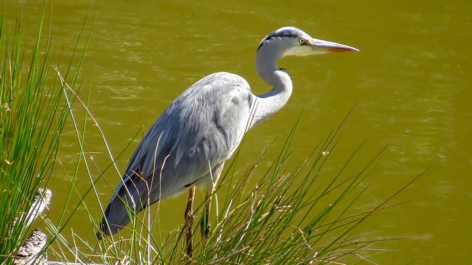 Bird Animal Dam 006.jpg