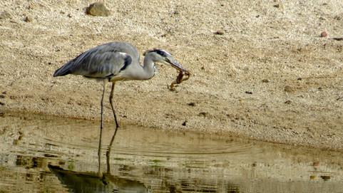 Bird Animal Dam 005.jpg