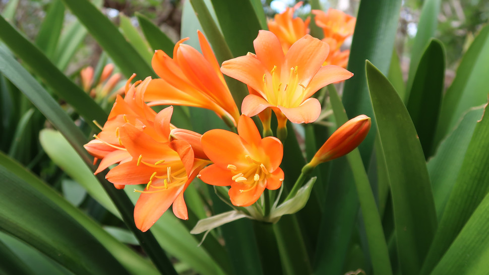 Flower Plant017.JPG
