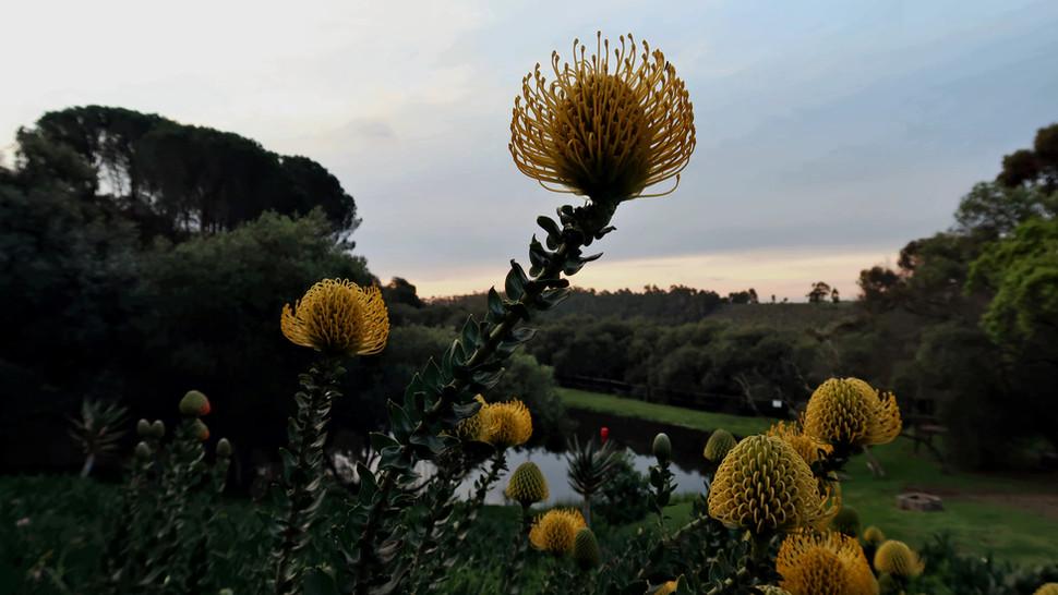 Flower Plant015.JPG