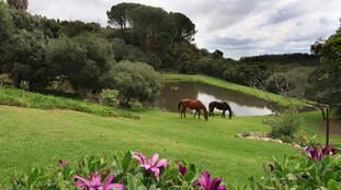 Animal Horse 002a.JPG