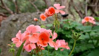 Flower Plant018.JPG