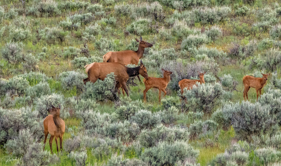 The Gathering, WY
