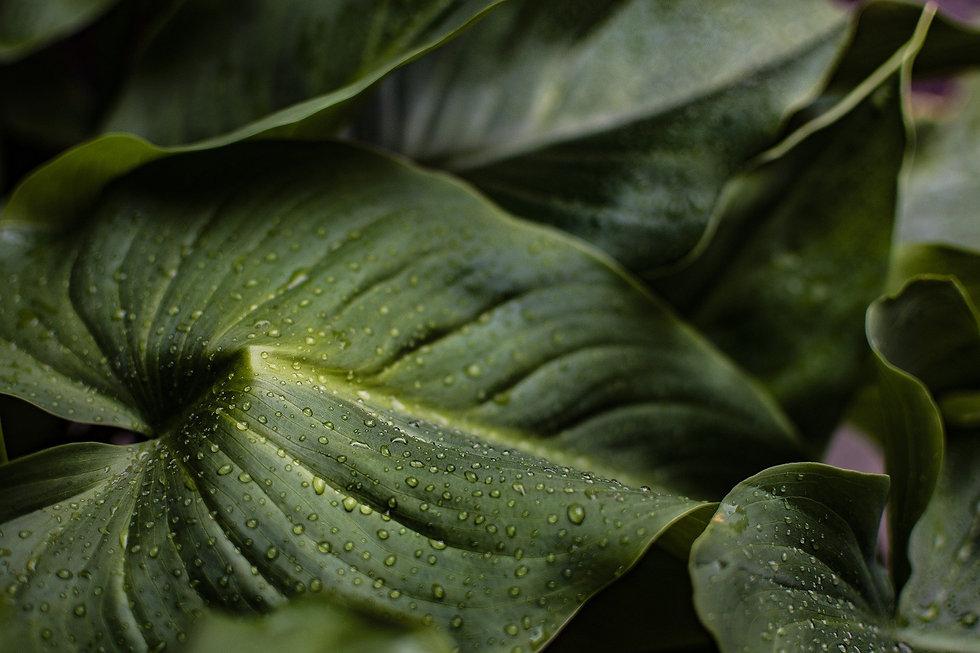 leaves-4012127_1920.jpg