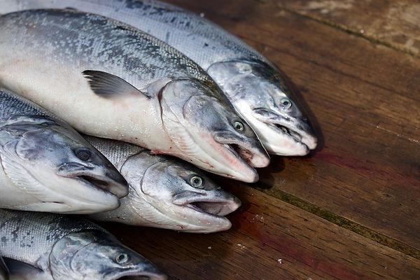Fischrestaurant Lagune