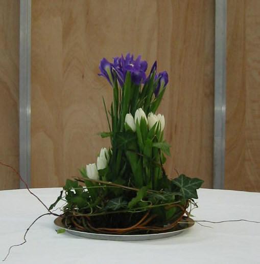 Tischpflanzen