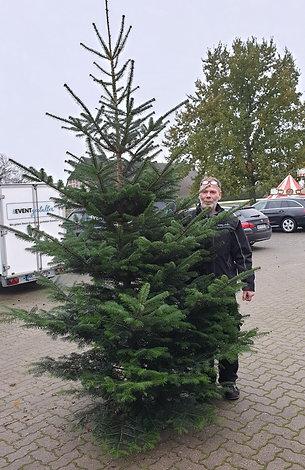 Weihnachtsbaum 260 - 300 cm