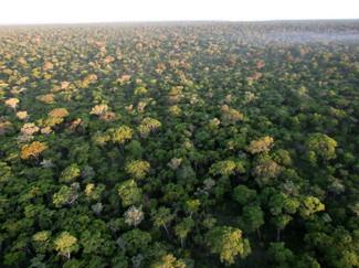 Aerial view of Kabeba Woodland
