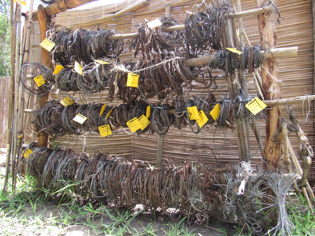Snares collected in 2017
