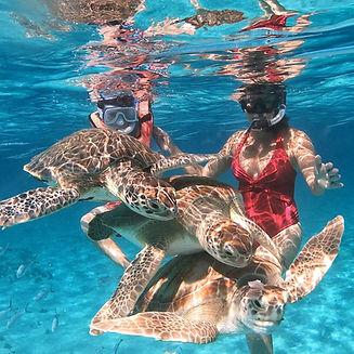 Turtletastictours
