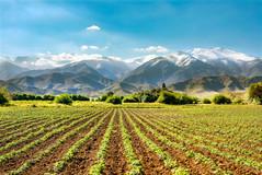 Mendoza- farming near Andes.jpg