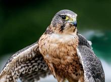 Hawl at Rosemoor.jpg